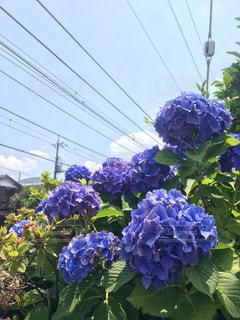 花の写真・画像素材[560858]