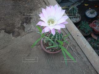 花の写真・画像素材[527889]
