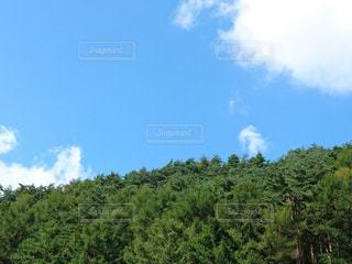 木々の緑と青空に浮かぶ雲の写真・画像素材[768108]