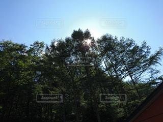 近くの木のアップの写真・画像素材[768109]