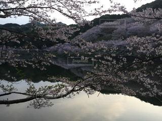 花見 - No.452671