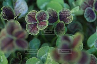 花の写真・画像素材[453286]