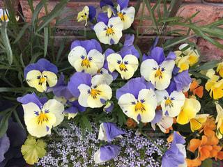 花の写真・画像素材[453140]