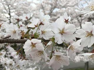 花の写真・画像素材[453143]