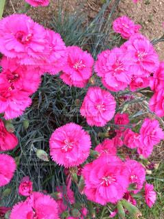 花の写真・画像素材[453328]