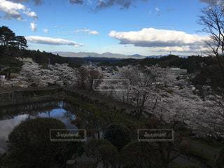 桜の写真・画像素材[453330]