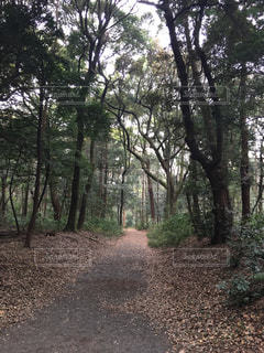 森林の写真・画像素材[636003]