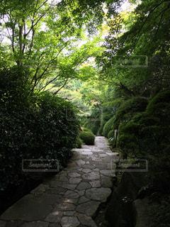 自然の写真・画像素材[560674]