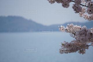背景の山と木の写真・画像素材[1103987]