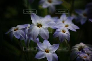 近くの花のアップの写真・画像素材[1103993]