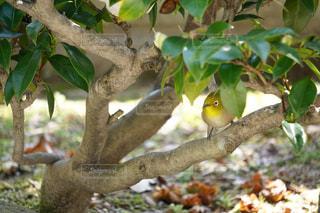 木の枝に座っている鳥の写真・画像素材[1104030]
