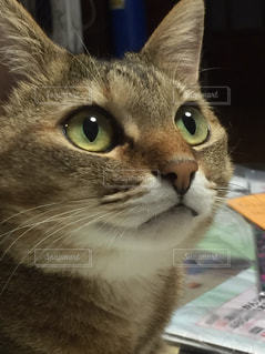 No.454298 猫