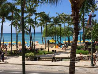 ハワイの写真・画像素材[454345]