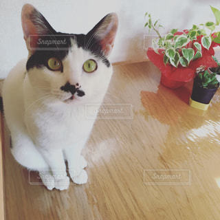 猫 - No.454490