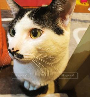 猫 - No.454497