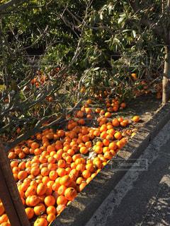 No.457041 オレンジ