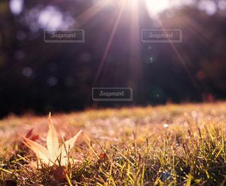 秋の写真・画像素材[489440]