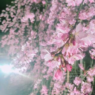 春の写真・画像素材[455308]