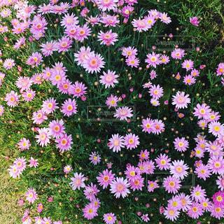 花の写真・画像素材[456316]
