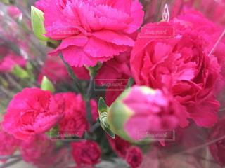 花の写真・画像素材[495906]