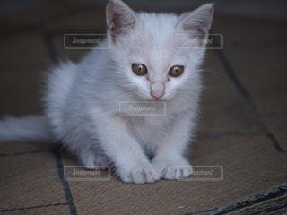 No.455803 猫