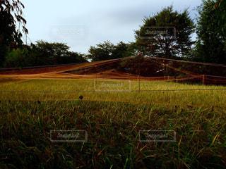 畑の写真・画像素材[455849]
