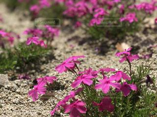 自然の写真・画像素材[467123]