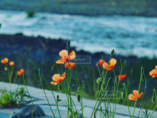 自然の写真・画像素材[513821]