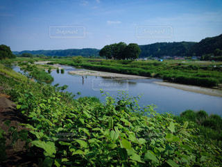 夏の里山の風景の写真・画像素材[847681]