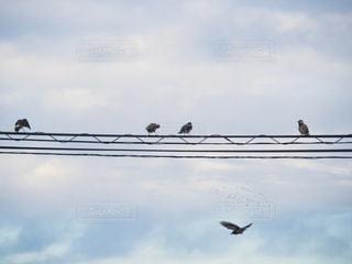 電線にとまっている野鳥と曇り空の写真・画像素材[988874]