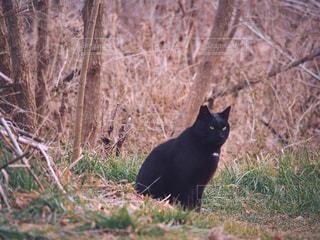 草地の上に座っている黒猫の写真・画像素材[2056836]