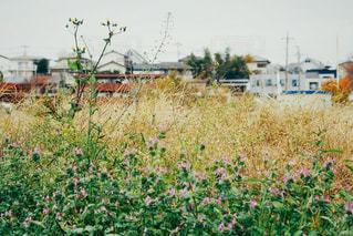 野草と街の写真・画像素材[2056837]