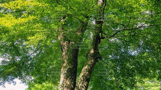 新緑の季節の写真・画像素材[2163045]