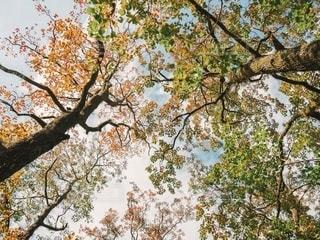 森の中の風景の写真・画像素材[2700736]
