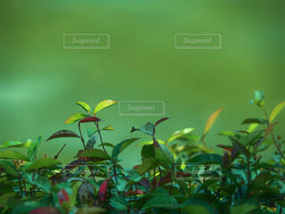 緑色の背景と植物の写真・画像素材[4790761]