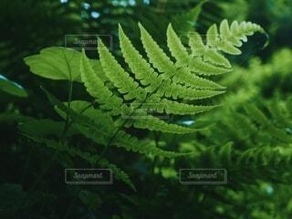 森林とシダ植物の葉の写真・画像素材[4790755]