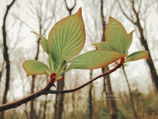 早春の森と若葉の写真・画像素材[4791457]