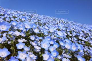 お花畑 - No.456213