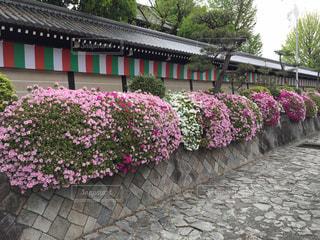 西本願寺の写真・画像素材[458525]