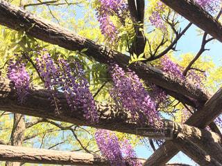 花の写真・画像素材[463024]