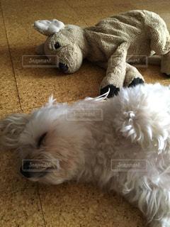 犬の写真・画像素材[457613]