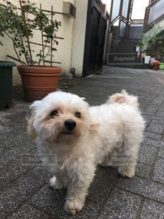 犬の写真・画像素材[457698]