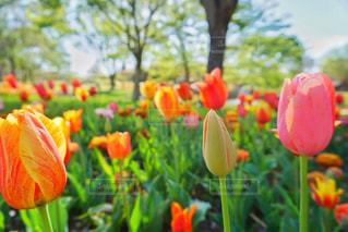 花の写真・画像素材[457558]