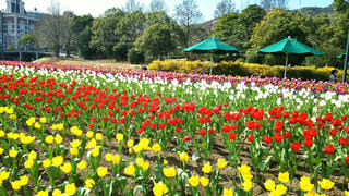 春の写真・画像素材[478269]