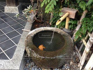 温泉の写真・画像素材[463373]