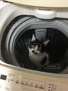 洗濯機の写真・画像素材[463892]