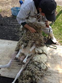 羊 - No.466842
