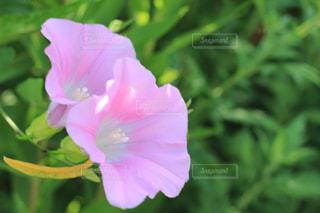花の写真・画像素材[680704]