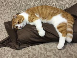猫の写真・画像素材[164366]