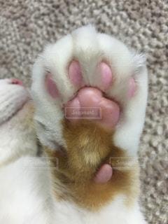 猫の写真・画像素材[164372]